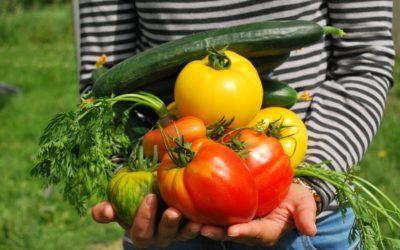 La dieta correcta para la salud de las piernas en caso de varices